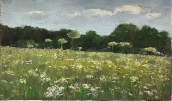 Daisy Craddock - Queen Anne's Lace