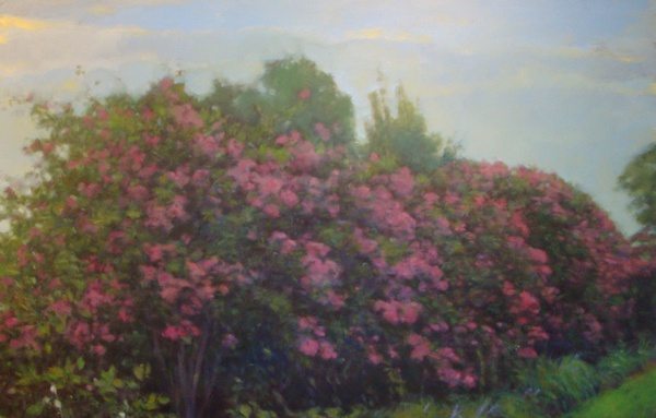 Daisy Craddock - Crepe myrtle, Holly Springs