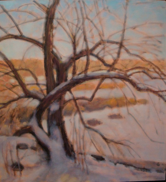 Daisy Craddock - Apple Tree in Snow