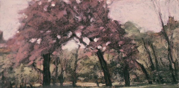 Daisy Craddock - Cherry Trees, Central Park